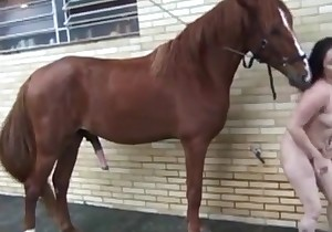 Horse is having some fun with a brunette